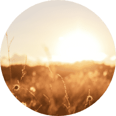 Abstract warm landscape of dry wildflower and grass meadow on warm golden hour sunset or sunrise time. Tranquil autumn fall nature field background@2x 2